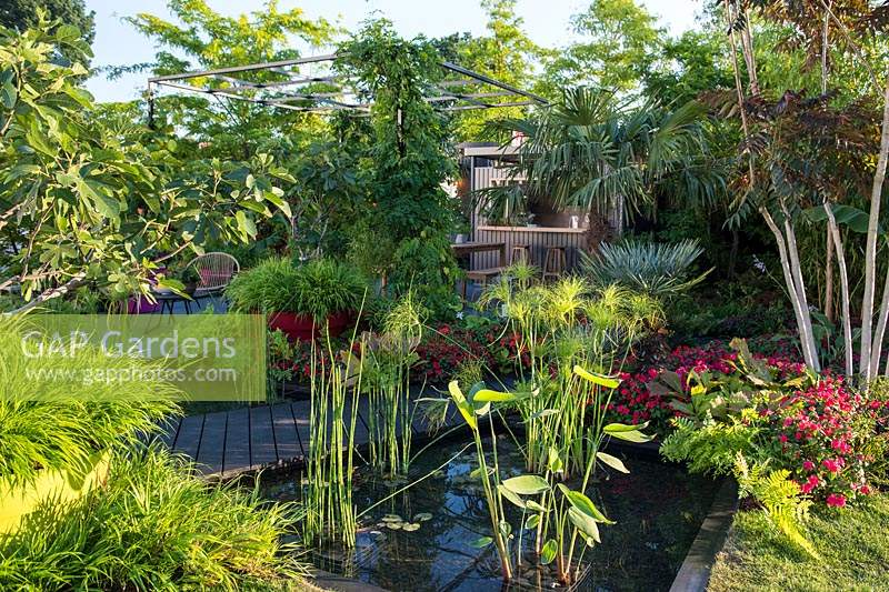 Pond with marginal plants Equisetum hyemale, Cyperus and Thalia in the garden with tender plants. B and Q Bursting Busy Lizzie Garden at RHS Hampton Court Palace Garden Festival Show 2018
