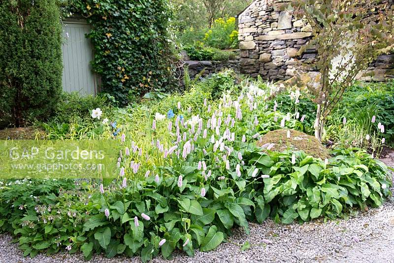Mixed flowerbed with Persicaria bistorta 'Superba' in country garden.