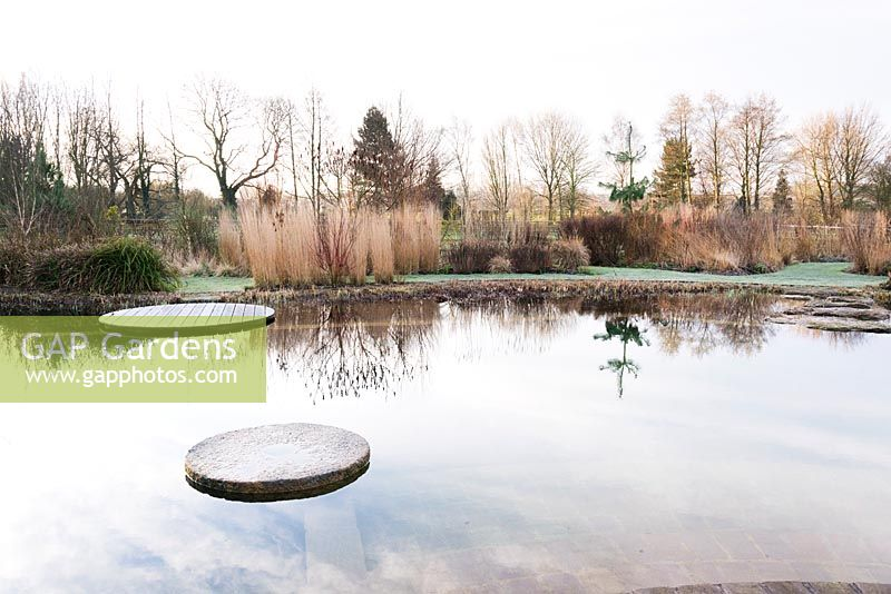 Natural swimming pool surrounded by grasses, willows and Cornus at Ellicar Gardens, Doncaster, UK.