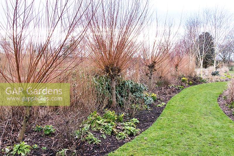 Border with Salix alba var. vitellina 'Britzensis', grasses and small early bulbs at Ellicar Gardens, Doncaster, UK.
