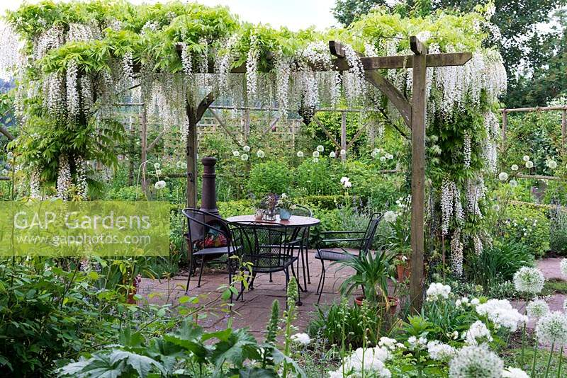 Seating area beneath pergola dripping with Wisteria floribunda 'Alba' and edged in borders of white flowers.