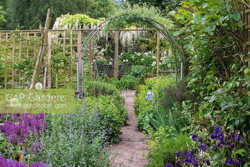 Path edged in catmint, Alchemilla and alliums leads from Cottage Garden to a pergola covered  in white Wisteria.