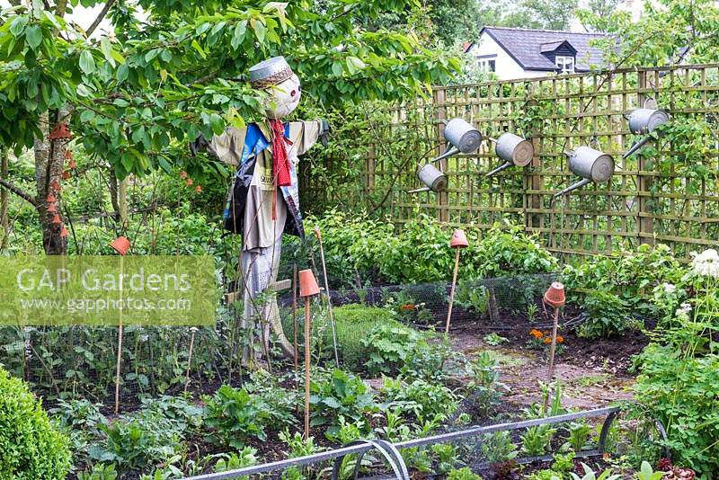A small vegetable garden with a scarecrow watching over rows of broad beans, courgettes and salad leaves.