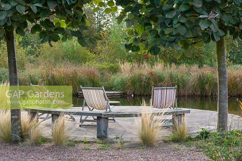 Looking past Sorbus aria 'Mitchellii' trunks and feather grasses to deckchairs on curved patio by natural swimming pool.