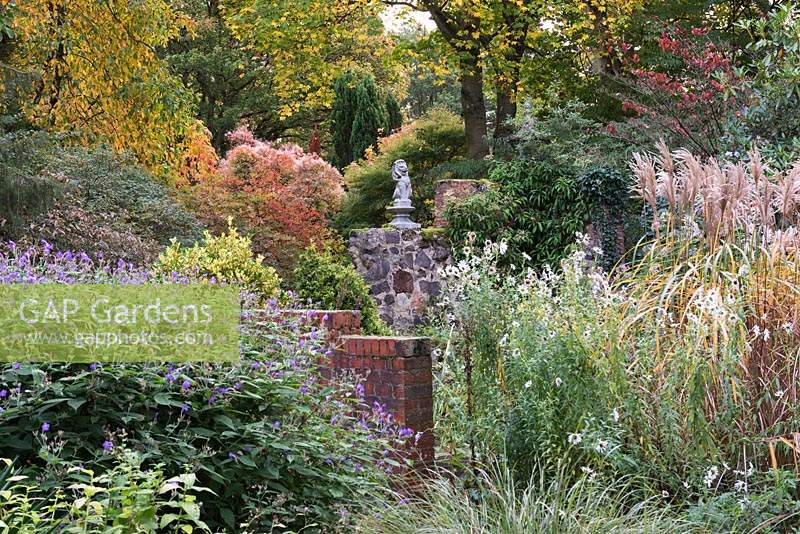 Autumn foliage in background from Nyssa sylvatica, smokebush and tulip tree. Front L-R: Strobilanthes rankanensis, shasta daisy and Miscanthus sinensis 'Malepartus'.