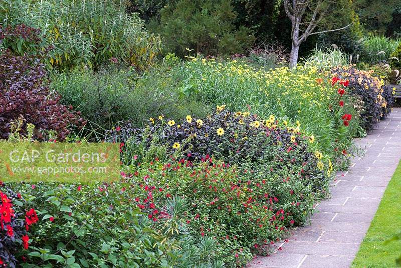 Long border with  dahlias L-R red 'Mystic Enchantment', yellow 'Mystic Illusion', and apricot 'Mystic Spirit'.  Interspersed with clumps of Bidens aurea 'Hannay's Lemon Drop'.