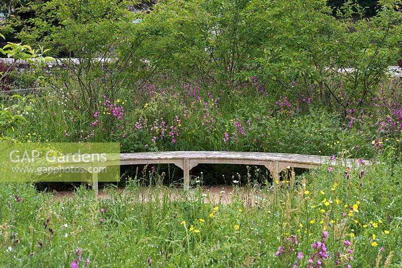 Curving oak bench surrounded by wildflowers, buttercups, red campion, vetch and daisies. Behind, screen of Amelanchier lamarckii.