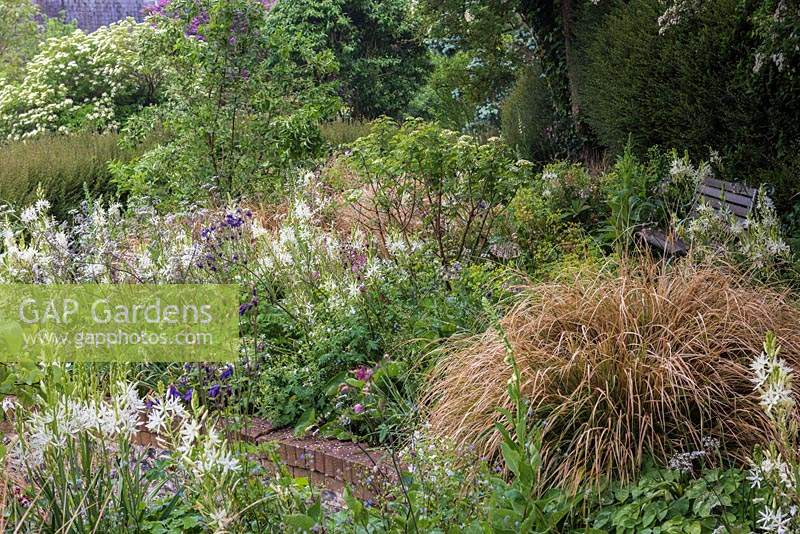Sheltered bench overlooking top terrace planted with Euphorbia amygdaloides var robbiae, Camassia leichtlinii alba, aquilegias, dogwoods, cranesbill, forget-me-nots and clumps of rusty pheasant's tail grass.