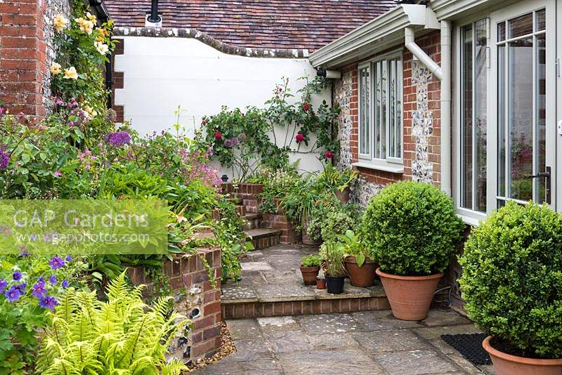 Rear terrace with box balls in pots, and a raised bed of hellebores, hardy geraniums, ferns, roses, red campion, aquilegias and alliums.