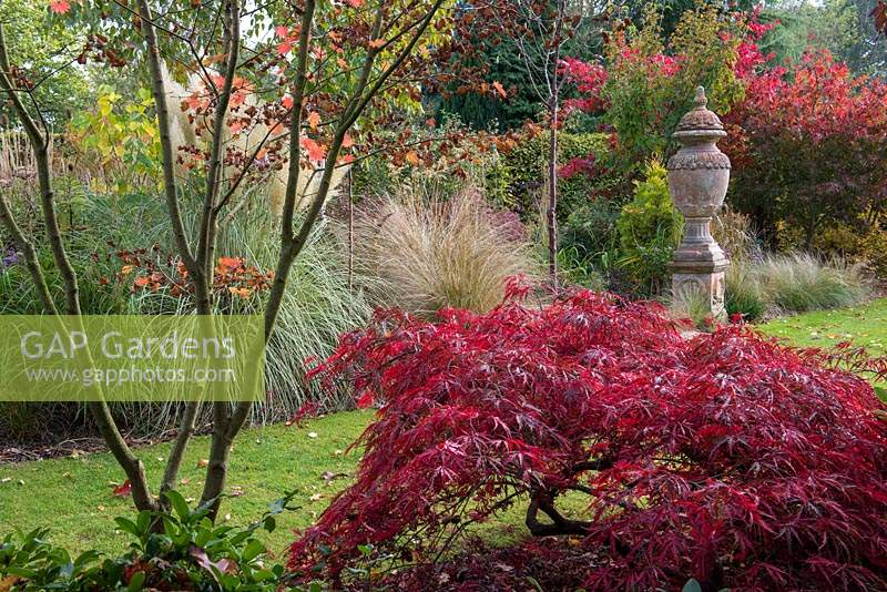 View over Acer palmatum 'Dissectum Garnet', a low growing Japanese maple, towards urn on plinth amidst ornamental grasses and maples.