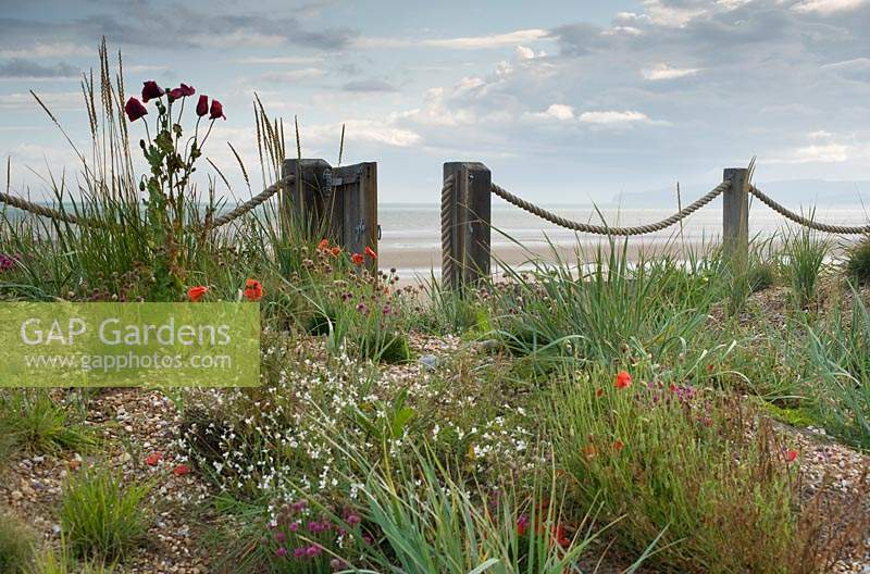 Wild flowers and grasses growing in pebble borders, with beach in the background.