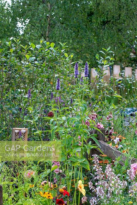Tall Agastache in a cottage garden with habitat house. RHS Hampton Court Palace Flower Festival 2019.