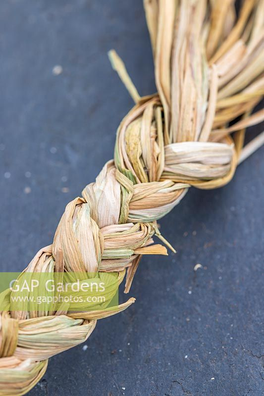 Plaited garlic 'Arno'