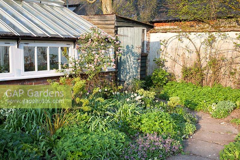 Narrow stone pathway through spring flower beds leading to rustic shed:  Little Court, Hampshire, UK