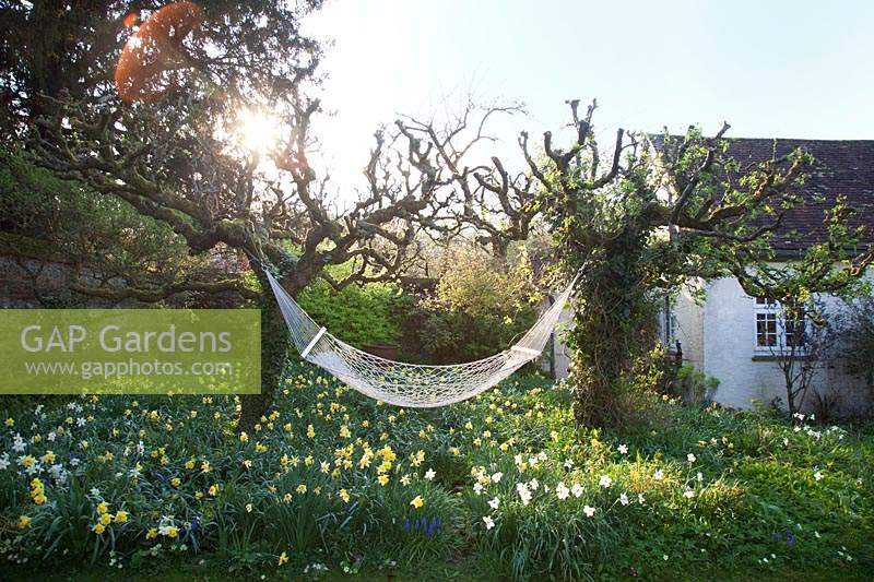 Cottage garden with decorative hammock above spring beds:  Little Court, Hampshire, UK
