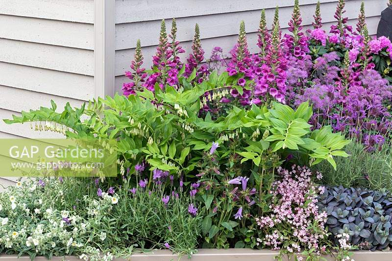 Flowering Polygonatum in raised bed with foxgloves. RHS Chelsea Flower Show 2019.
