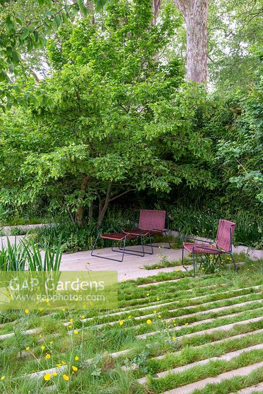 The Savills and David Harber Garden, RHS Chelsea Flower Show 2019. Stone steps inter-planted with grass, seating area under Carpinus betulus