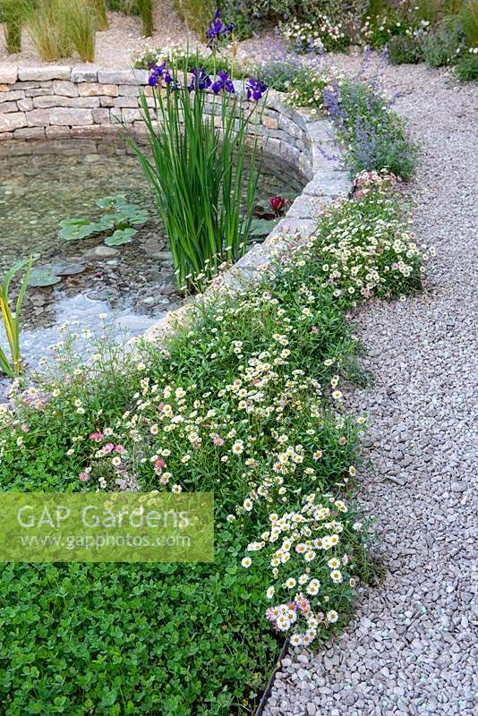 Gravel path round a circular pond, edged with Erigeron karvinskianus and Clover lawn - The Harmonious Garden of Life, RHS Chelsea Flower Show 2019.