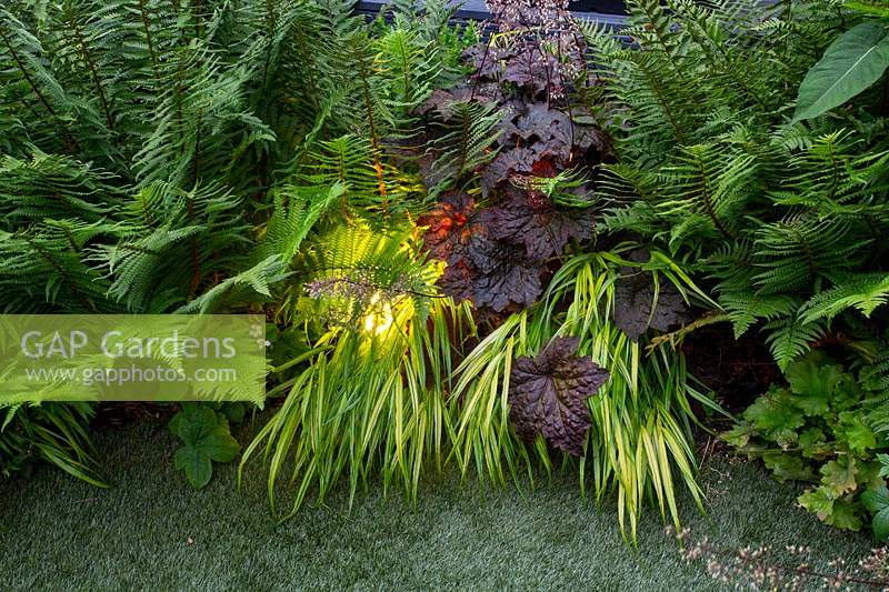 Small shade tolerant garden in London with a green theme at night with lighting. Planting includes Dryopteris affinis, Hakonechloa macra Aureola, Taxus media Hillii, Digitalis grandiflora ambigua. The border surrounds a small circular artificial lawn.