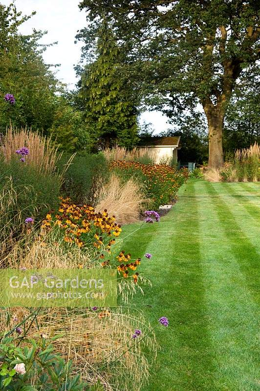 View along a striped lawn to a specimen tree. On one side, a perennial border containing Helenium, Verbena bonariensis and ornamental grasses