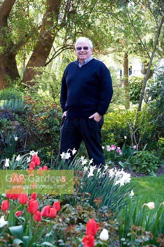 Man standing in garden near bed of flowering Narcissus - Daffodil and Tulipa - Tulip