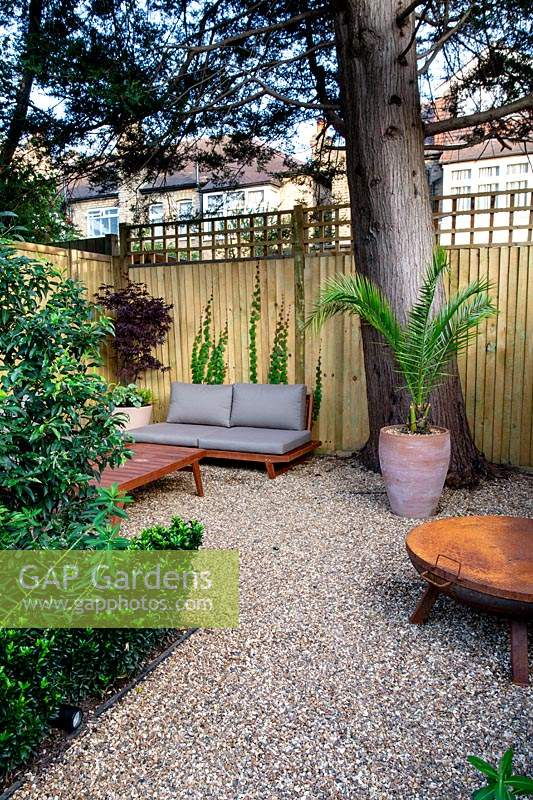 Lower gravel covered patio area in West London garden, with sofas and fire pit - planting includes Prunus lusitancia Angustifolia, Euphorbia wallichii, Phoenix palm in terracotta pot, Acer palmatum purpurea in container by sofa.