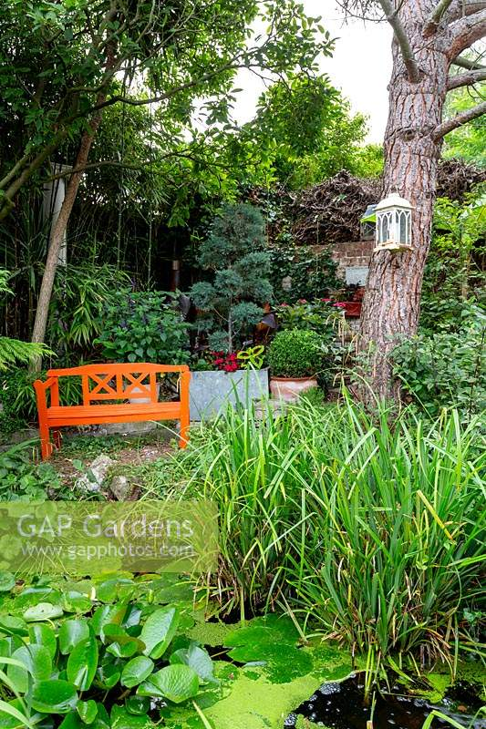 Modern cottage garden in West London. View looking towards shady pond area and orange painted wooden seat.