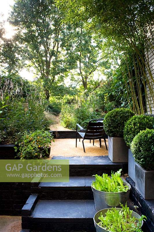 Black steps lined with containers of herbs and clipped buxus leading to a multi level narrow urban garden