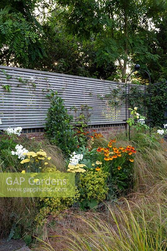 View of boundary brick wall topped with horizontal slatted fence painted grey. Flower bed in front of wall contains obelisk and plants: Phlox 'David', Achillea 'Moonshine', Stipa arundinacea, Helenium 'Moerheim Beauty' and Alchemilla mollis