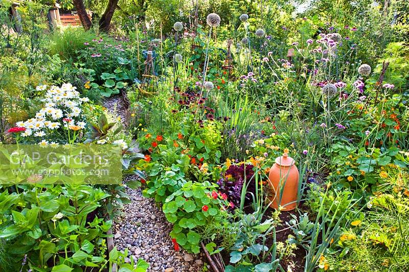 Mixed planting with vegetables, herbs, annuals and perennials. Zinnia, Nasturtium, Rudbeckia hirta, Verbena bonariensis and flowering Allium - Leek and Welsh Onion
