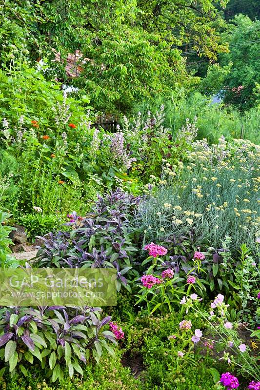 Mixed herb bed with Salvia sclarea, Helichrysum italicum, Duanthus, Lavatera trimestris - rose mallow, Salvia officinalis 'Purpurescens', chamomile.