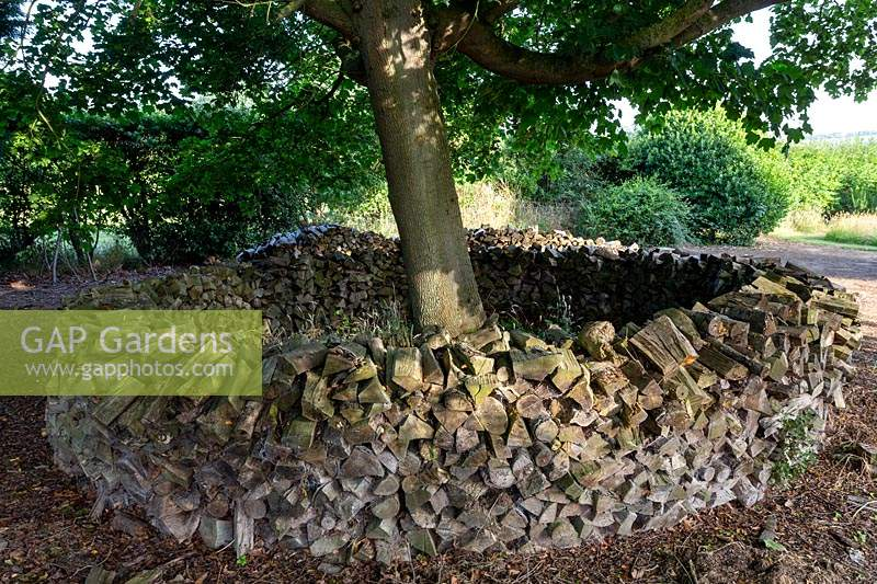 Acer platanoides - Norway Maple - with decorative circular wood pile habitat around trunk