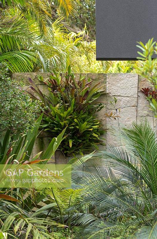 A sandstone wall made with irregular shaped blocks decorated with a display of bromeliads and orchids surrounded by garden palms and strappy leaved plants.