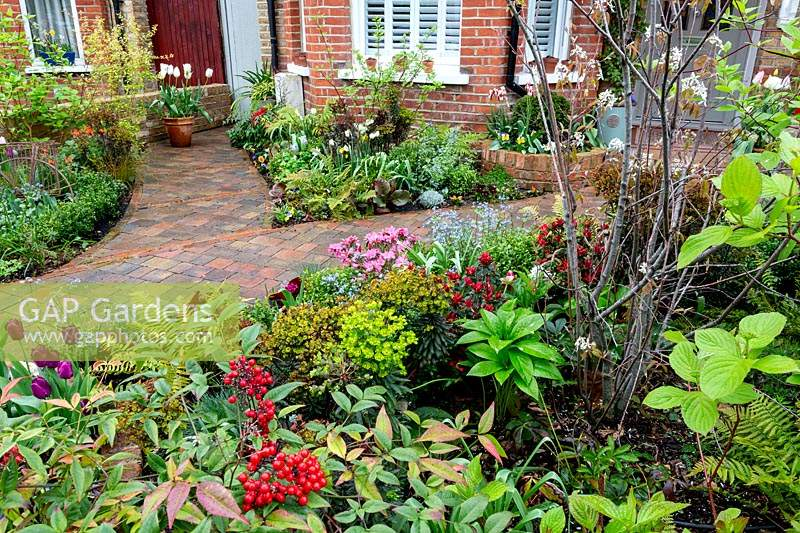 Spring front garden in West London with planting of Amelanchier lamarckii,   Dryopteris atrata and Nandina domestica