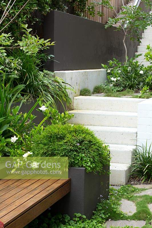 A cement rendered planter box with a hardwood timber inbuilt bench seat in front of a set of concrete steps leading to an upper area of the garden, it is planted with Baby Panda Grass and a flowering Gardenia.