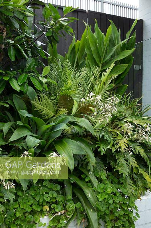 Detail of a lush green raised garden with a variety plants, featuring flowering Australian native violet, Renga Lily, Philodendron Xanadu, Silver Lady Fern, and ginger.