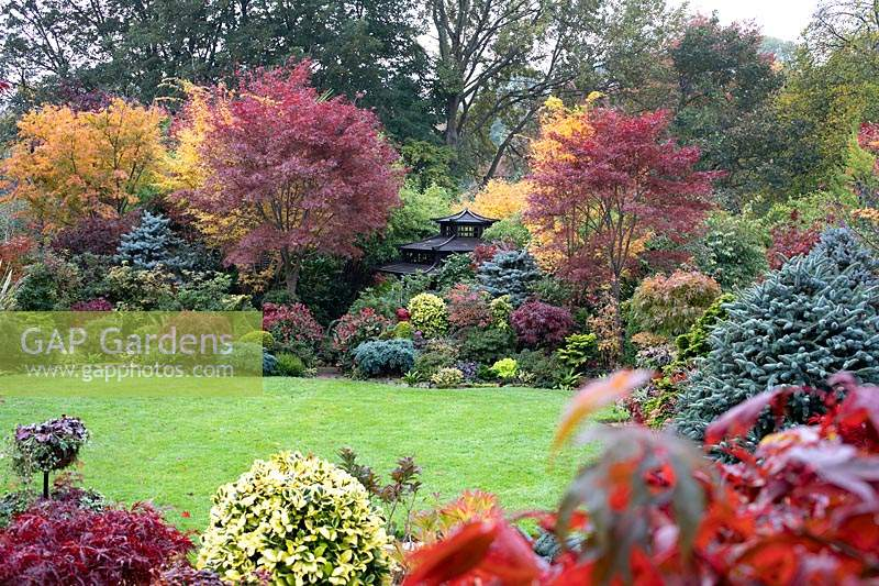 Autumnal colours of mixed acers, conifers, photinias and azaleas surround the black Japanese style tea house at Four Seasons garden, Walsall, West Midlands, in October