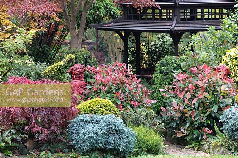 Autumnal colours of mixed acers, conifers, photinias and azaleas surround the black Japanese style tea house at Four Seasons garden, Walsall, West Midlands.