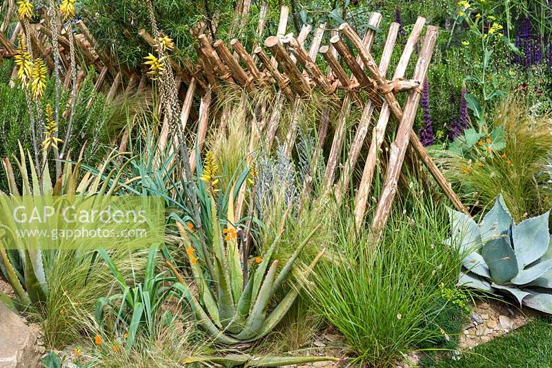 Sweet Chestnut hurdle fences with planting in Sentebale. Hope in Vulnerability Garden- RHS Chelsea Flower Show 2015. Sponsor: David Brownlow charitable foundation, Princes Foundation for Building Community - People's Choice 2015.