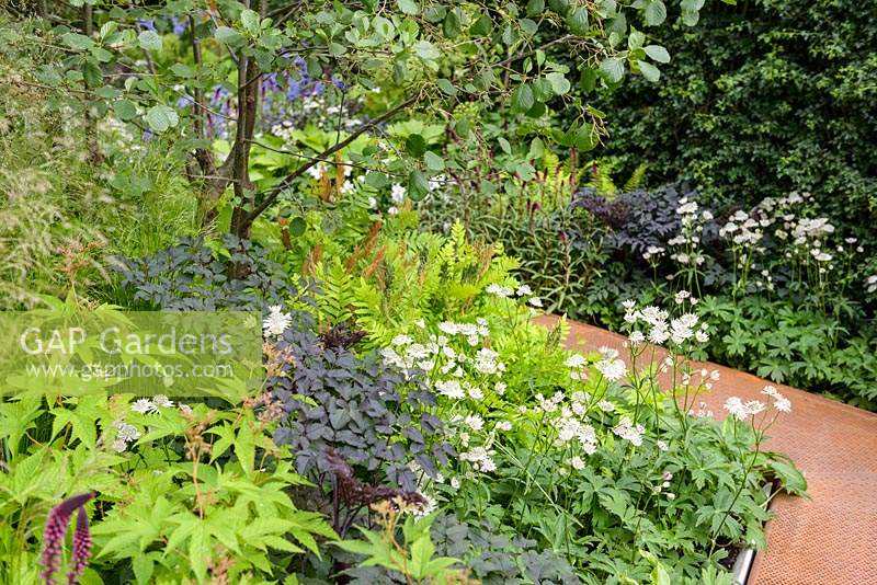 Path leading through mixed planted borders in The Waterscape Garden at RHS Chelsea Flower Show 2014 - Sponsor: RBC