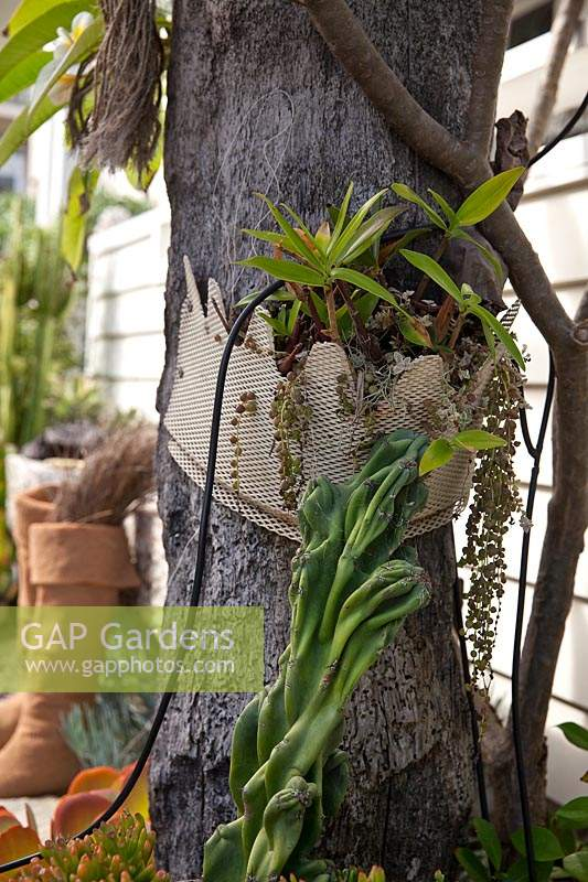Detail of the an old wharf timber garden feature with a decorative metal screen attached to it as a planter with a pink rock orchid and a String of Pearls succulent featuring a Monstrose Apple Cactus.