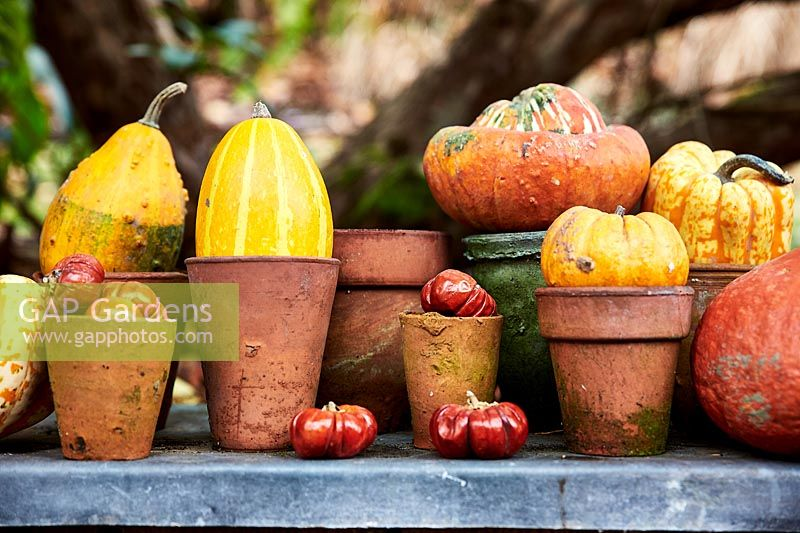 Dried mini pumpkins and gourds arranged in vintage terracotta pots