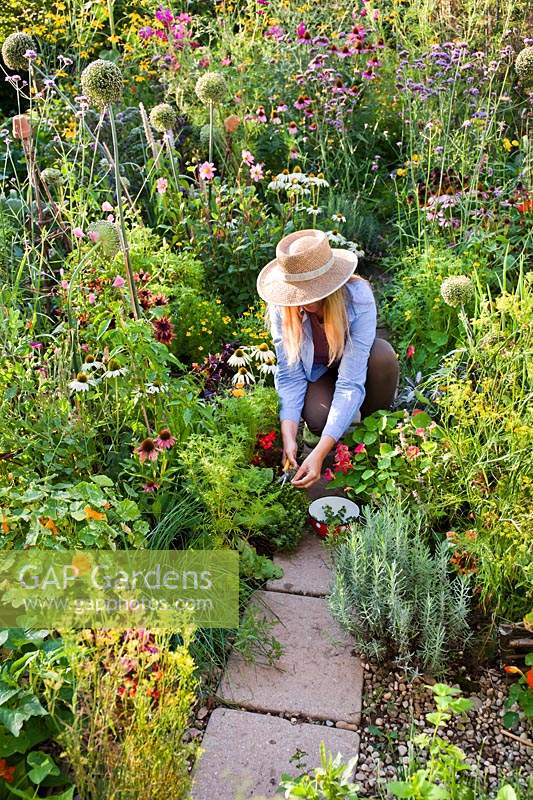 Woman picking Thymus - Thyme