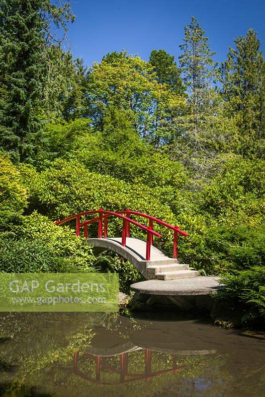 Japanese-style garden with red moon bridge over water, plants include: Acer palmatum, Viburnum, Rhododendron and Taxus cuspidata