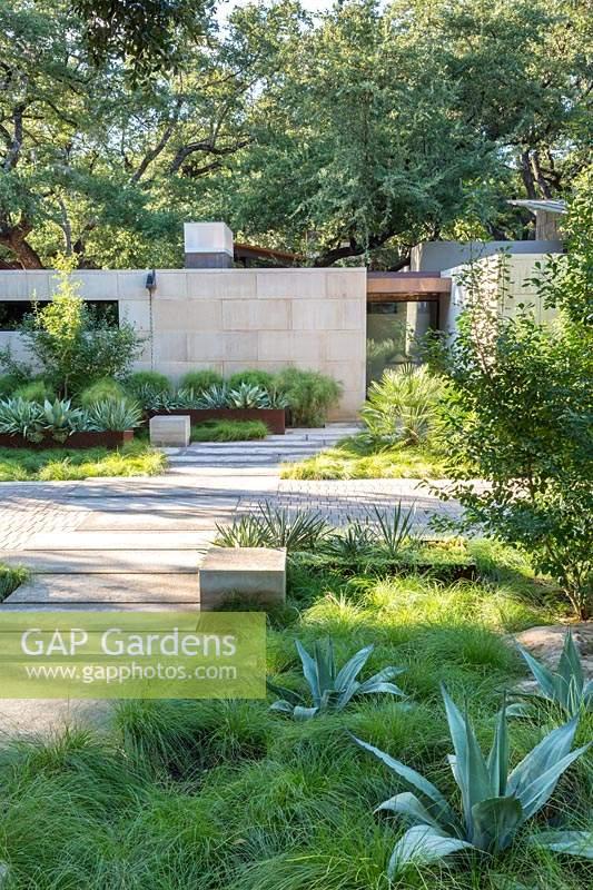 Gap Gardens Agave Ovatifolia And Carex Texensis Catlin Sedge