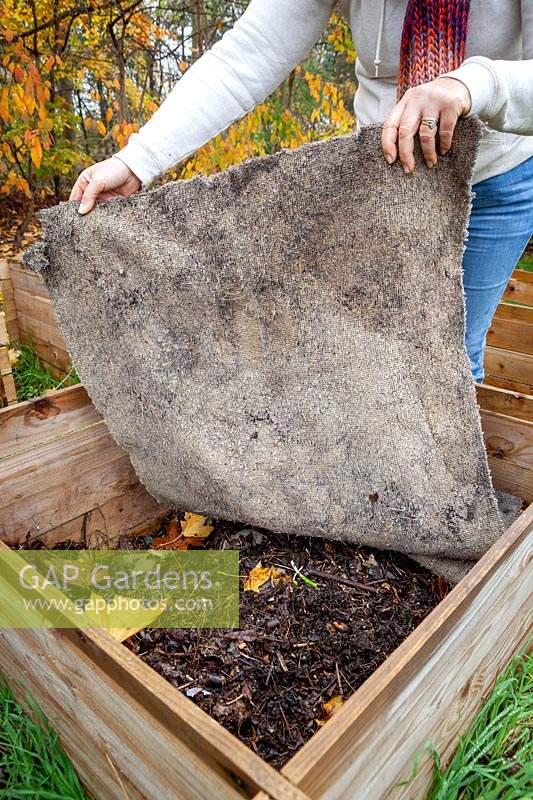 Covering a compost heap with an old carpet