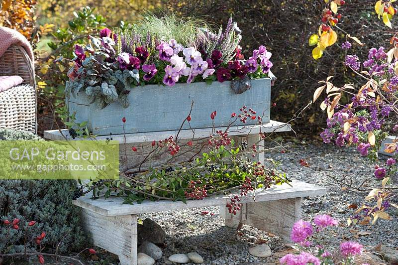 Autumn container planted with Viola, Heather and grasses on wooden steps with Rose hips