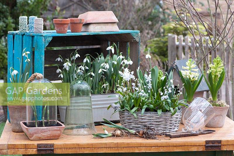 Table arrangement with snowdrops, hyacinths and Lebanon squill.