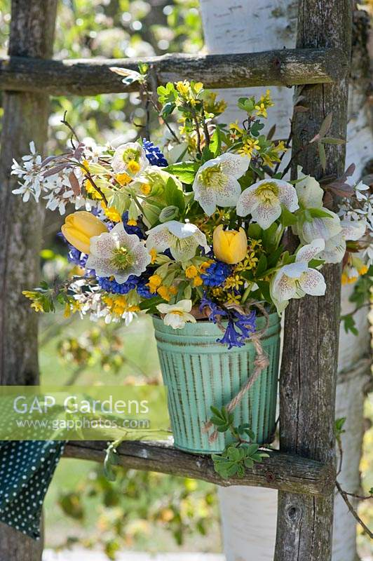 Floral arrangement in metal vase on a latter, flowers include: Helleborus - Hellebore, Amelanchier, Tulipa - Tulip, Primula - Cowslip, Forsythia, Muscari - Grape Hyacinth and Hyacinthus