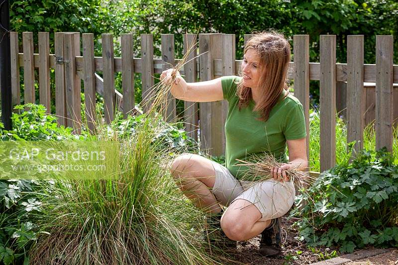 Combing through a stipa to remove dead grass